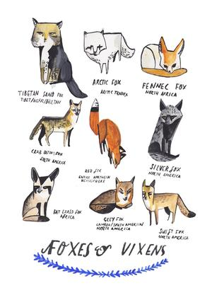 20160316_DickVincent_3_foxes