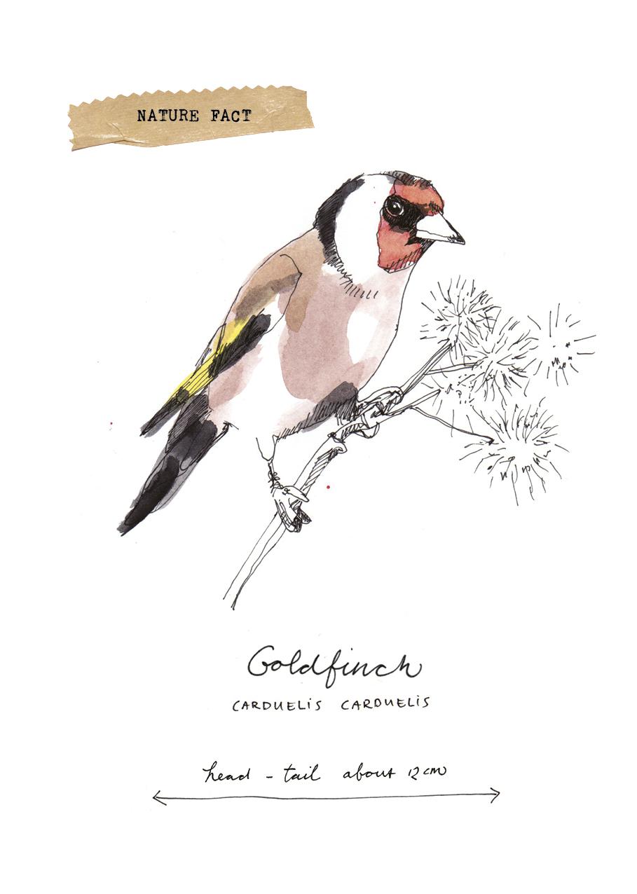 Journalvogel