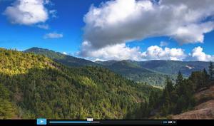 redwoods-kopie