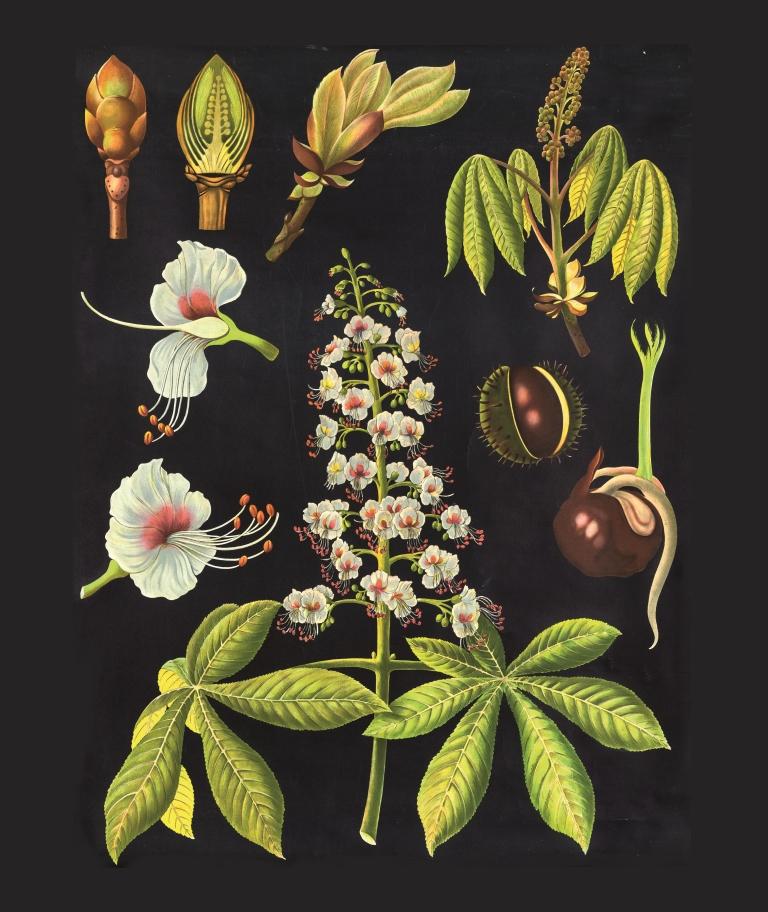 botanical23