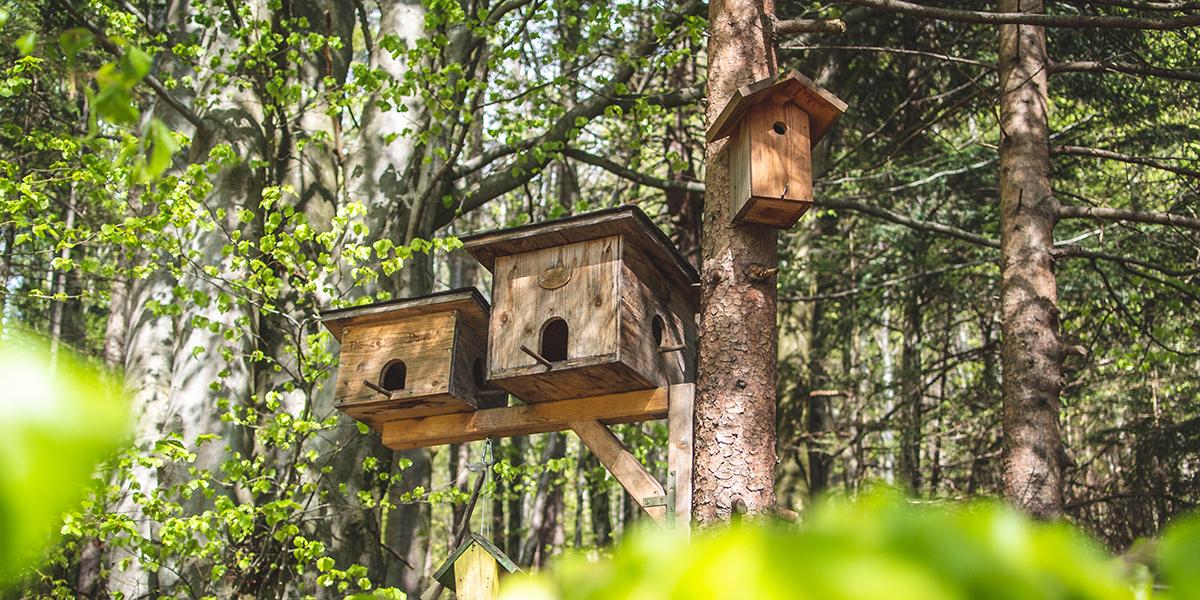 5 tips om een nestkastje op te hangen in je tuin
