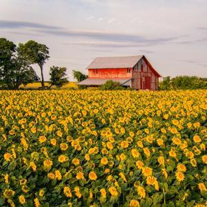 boerderijen