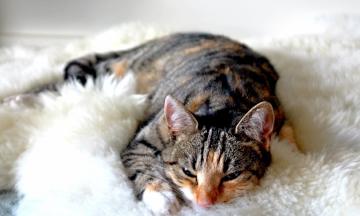 5 redenen waarom het heerlijk is om met je lover te slapen
