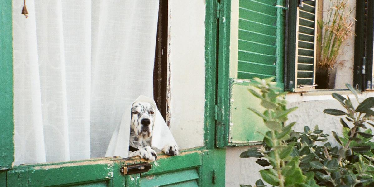 hondje kluizenaar 1 alleen leven