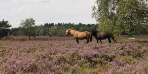 Wandelingen in Brabant