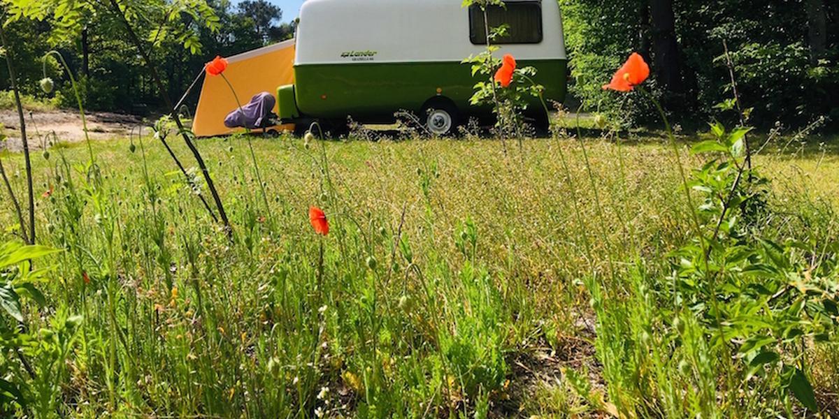 Camping Hartje Groen