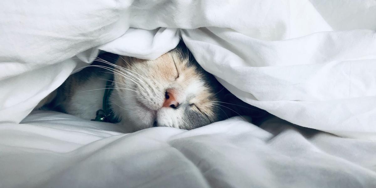 slapen