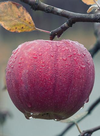 appelfiguur