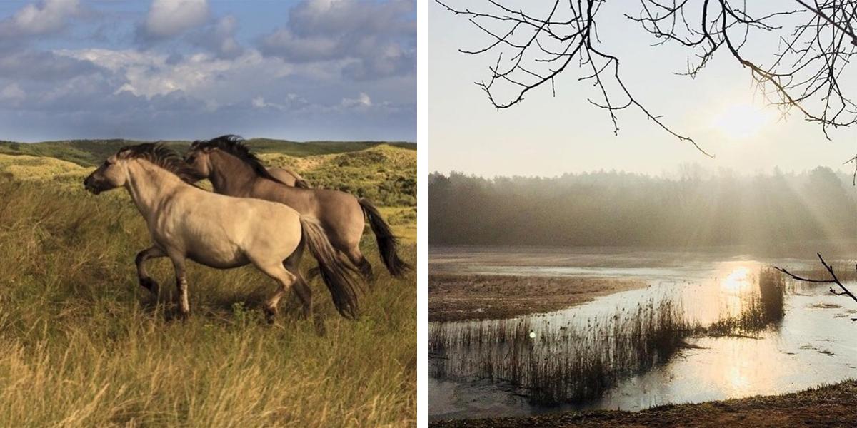 Wandelingen in Noord-Holland
