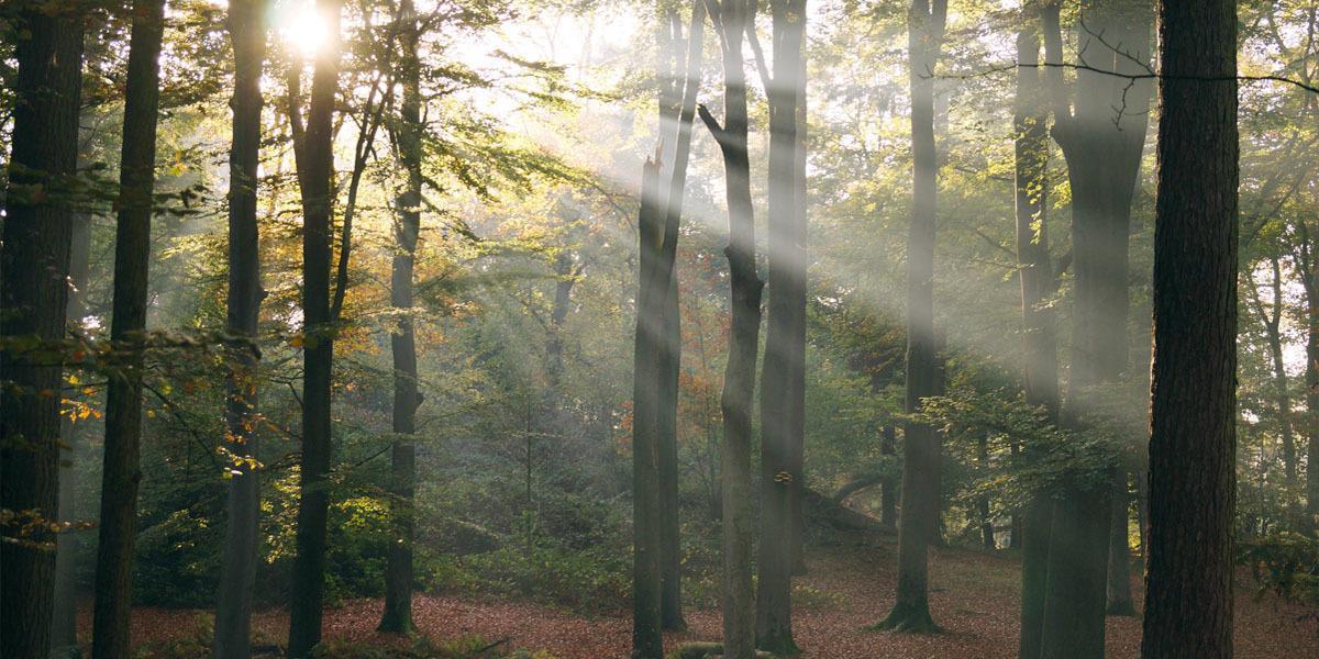 Shinrin-yoku: immersing yourself in nature - Flow Magazine