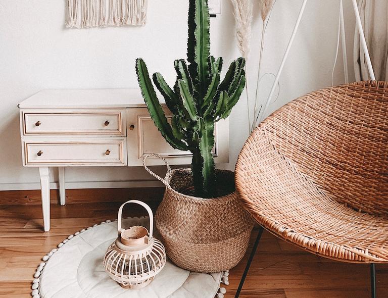 adopteer een plant
