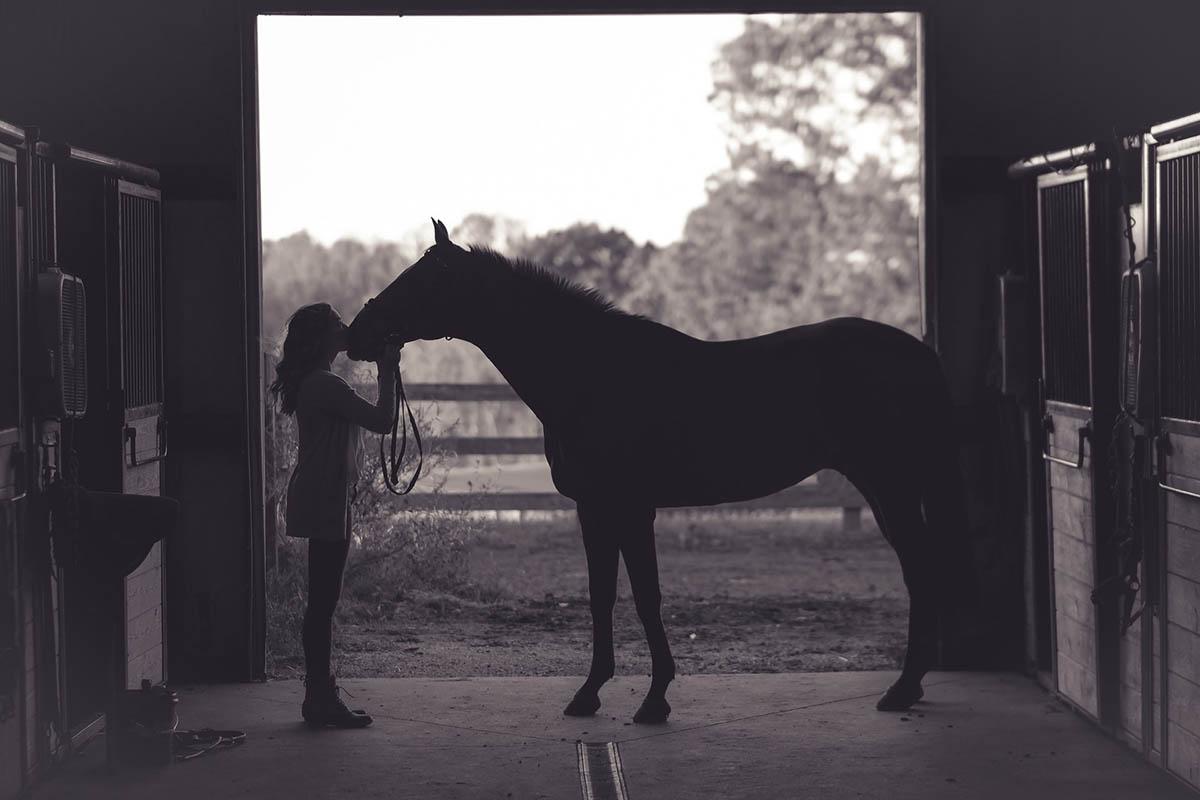 paard aan huis