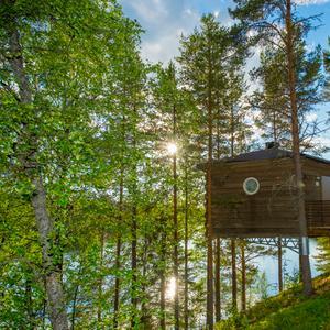boomhut in Zweden