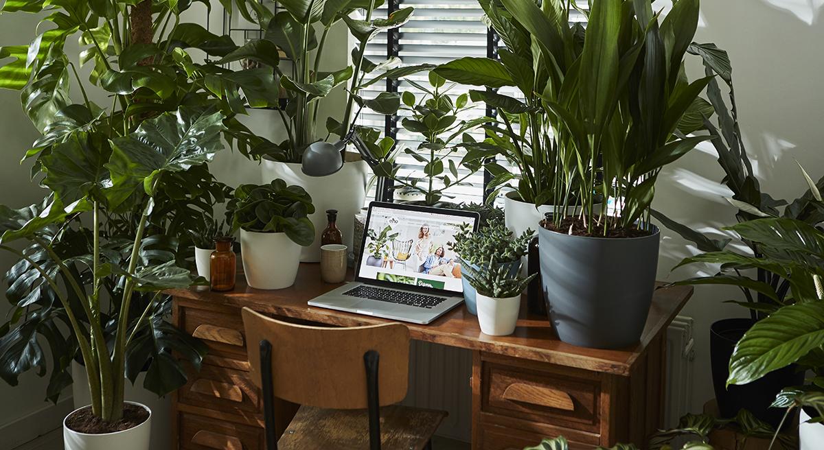 header elho planten werkplek