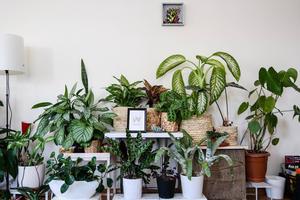planten stekken