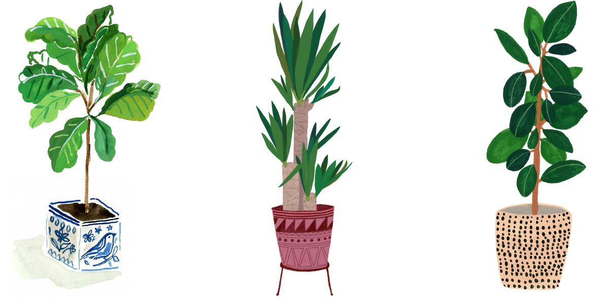 Drawing plants