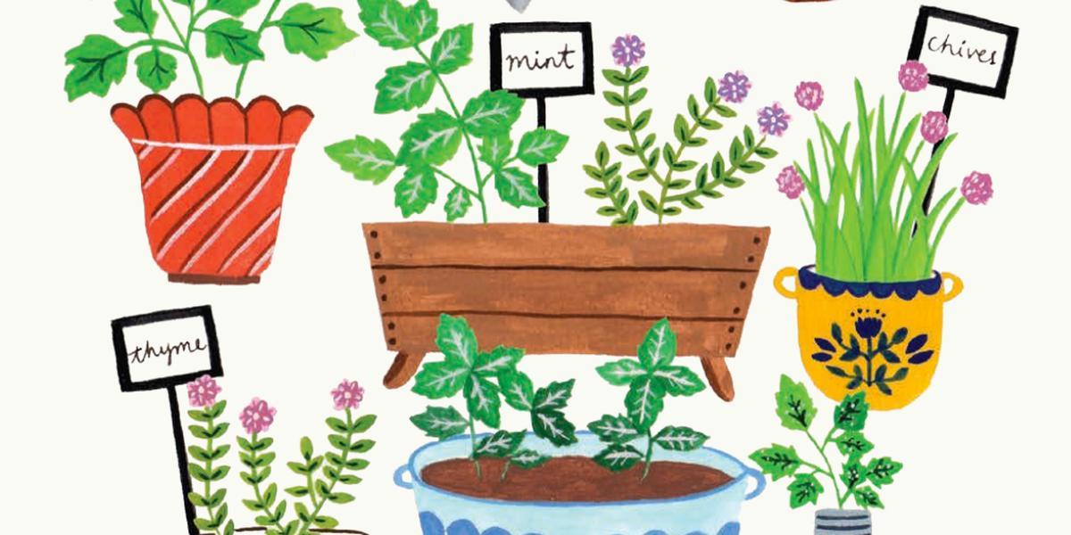 How to draw a herb garden - Flow Magazine